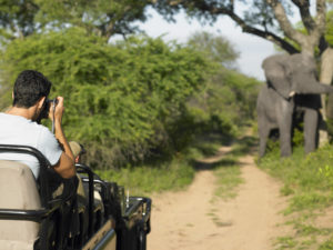 Man-on-safari-taking-photograph-of-elephant-back-view